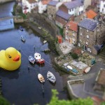 Staithes Duck